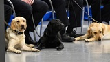 Meet the CIA's newest 4-legged grads and retirees