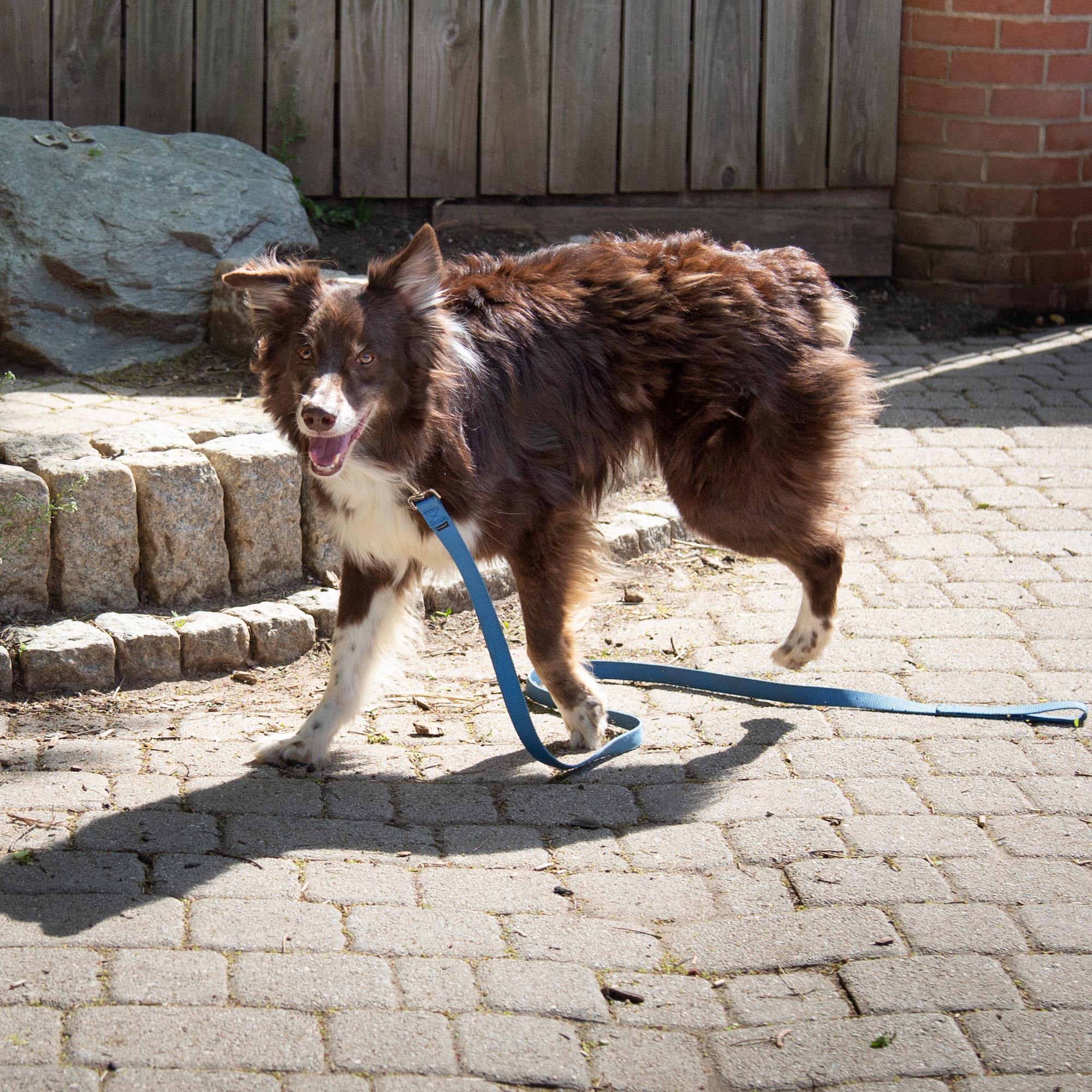 This tripod pup may only have three legs, but he doesn't let that slow him down.(Image: Courtesy HRA)