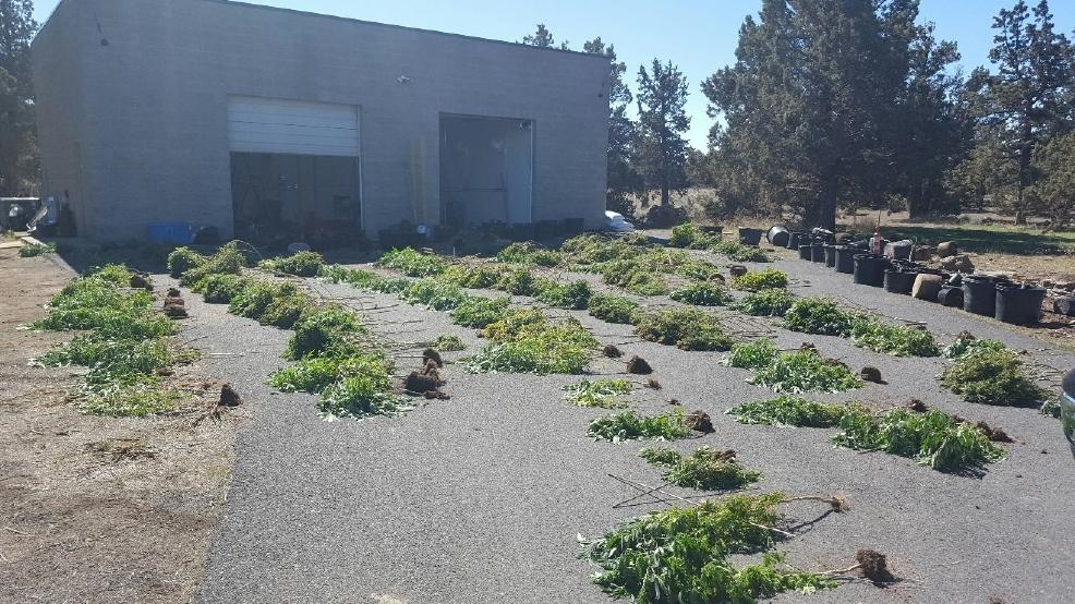 Police seize butane honey oil lab in Deschutes County | KATU