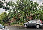 Tree Down PPB Photo 2.jpg