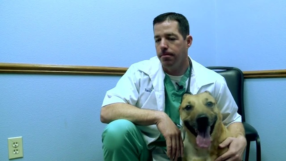 Veterinarian Cancer Specialist In Iowa