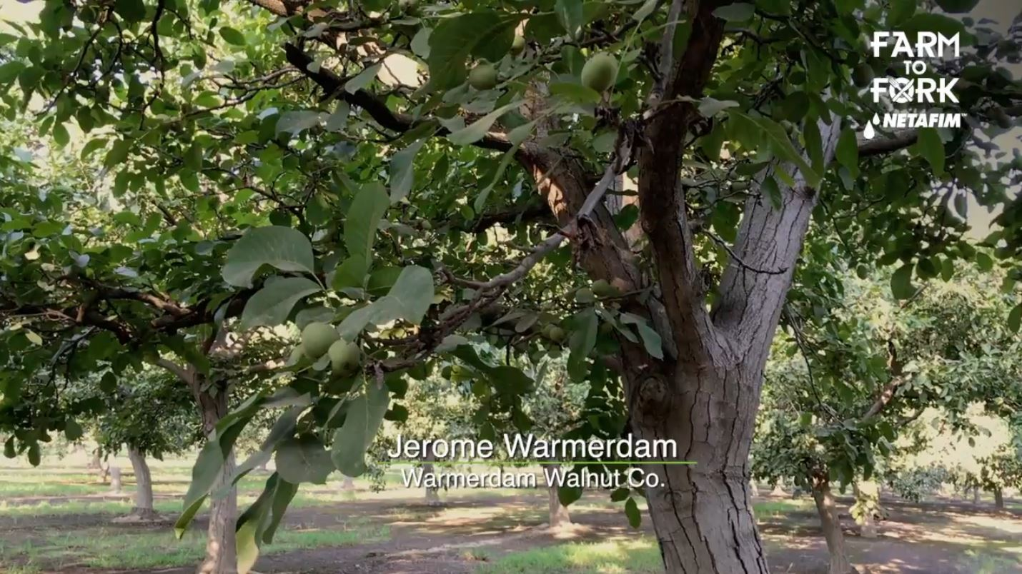 Jerome has some walnut trees that were planted back in 1962 that are still producing today.