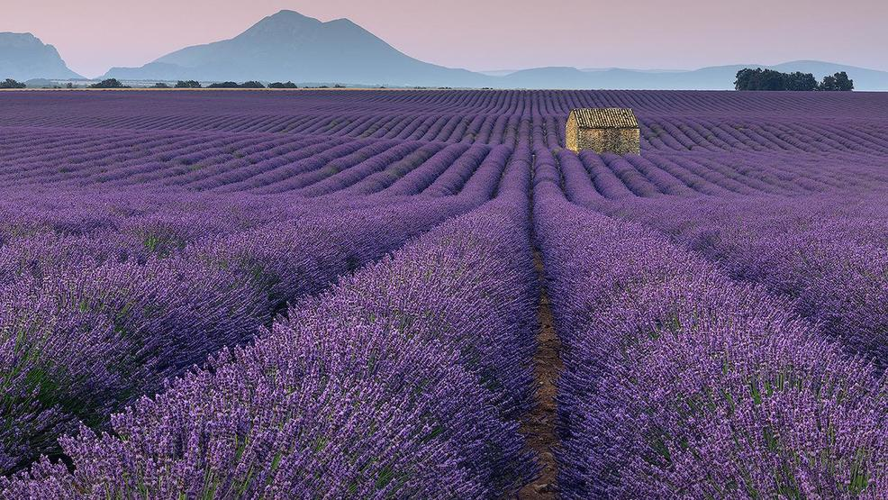1005445802 OR_Med_Harder-lavendar.jpg
