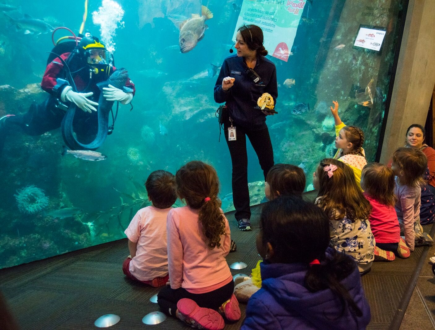 The Window on Washington Waters diver's show gives you a chance to learn about nearby oceanic ecosystems.