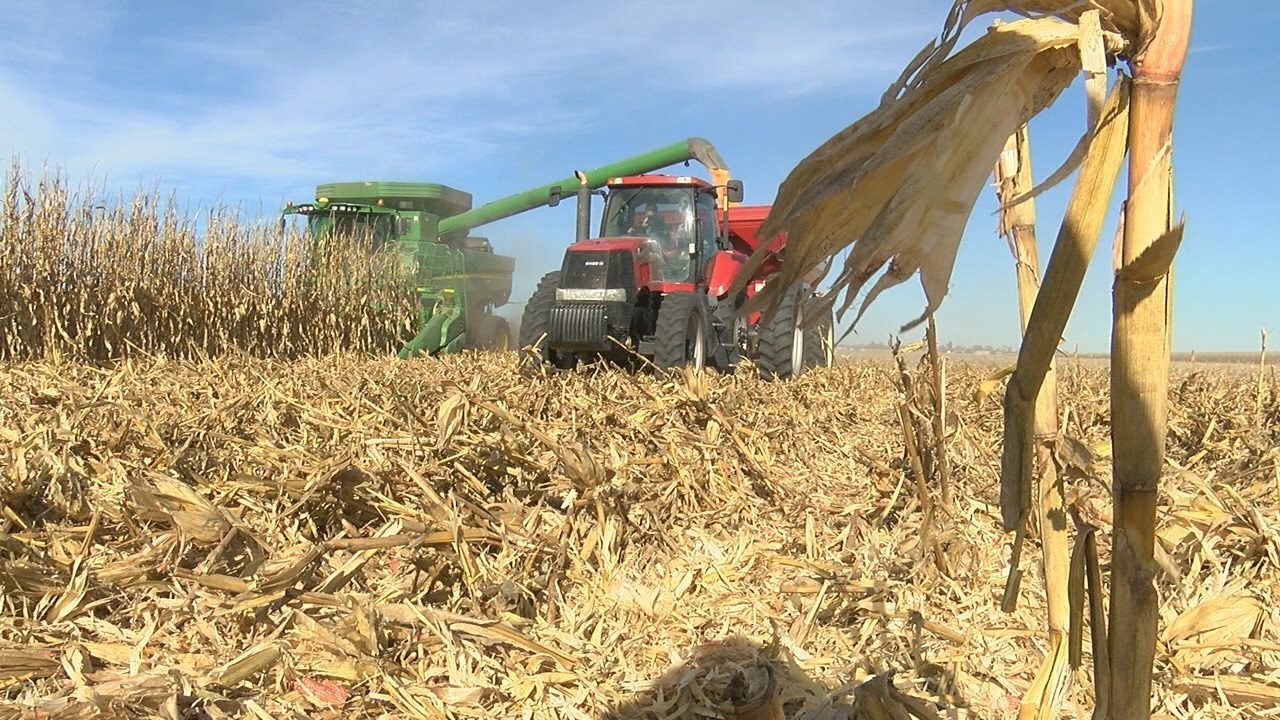 Rauert Harvest (NTV News)