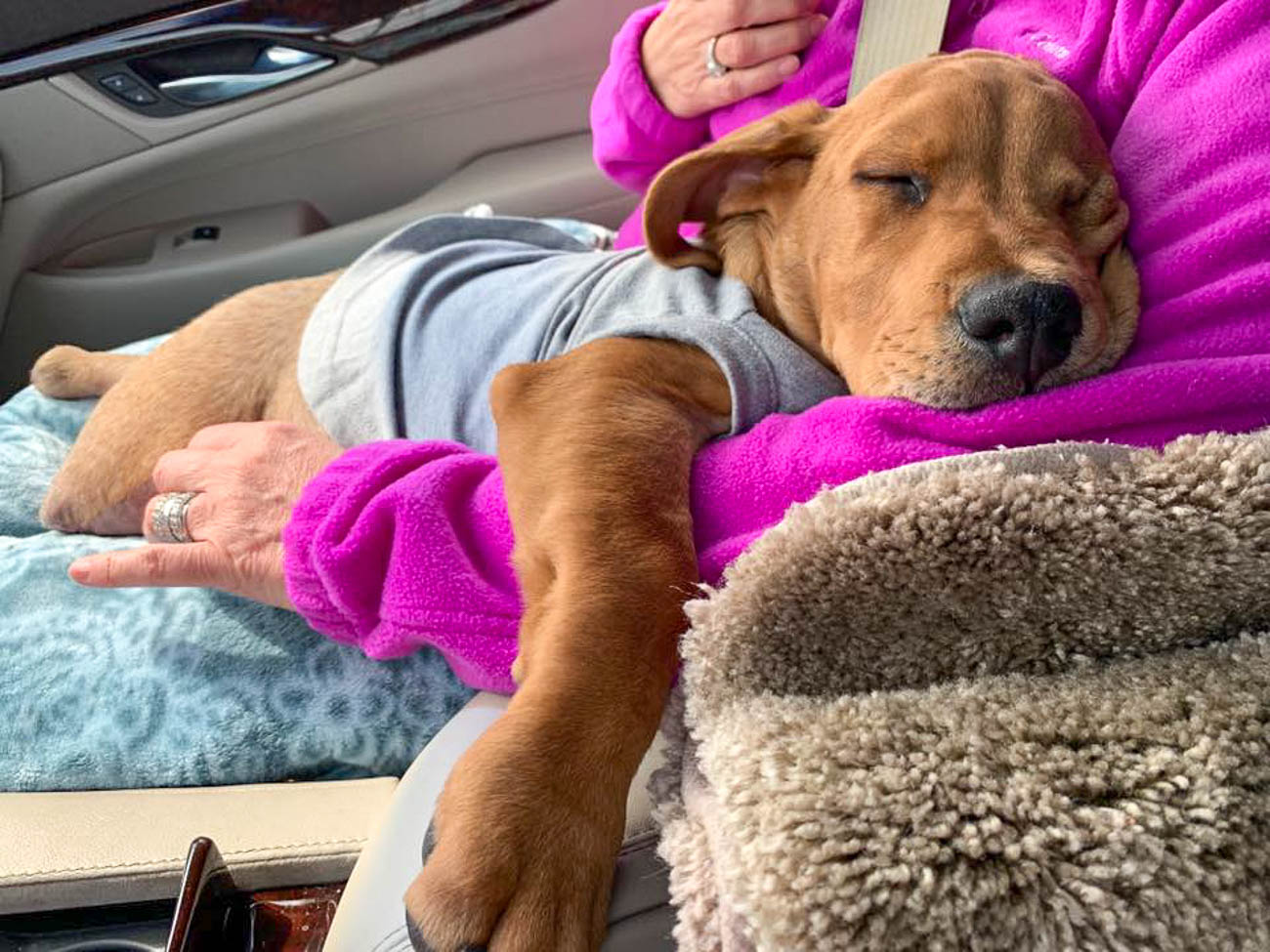 Trooper catches a snooze in the car after meeting & greeting with fans / Image courtesy of The Trooper Telegraph // Published: 9.8.19