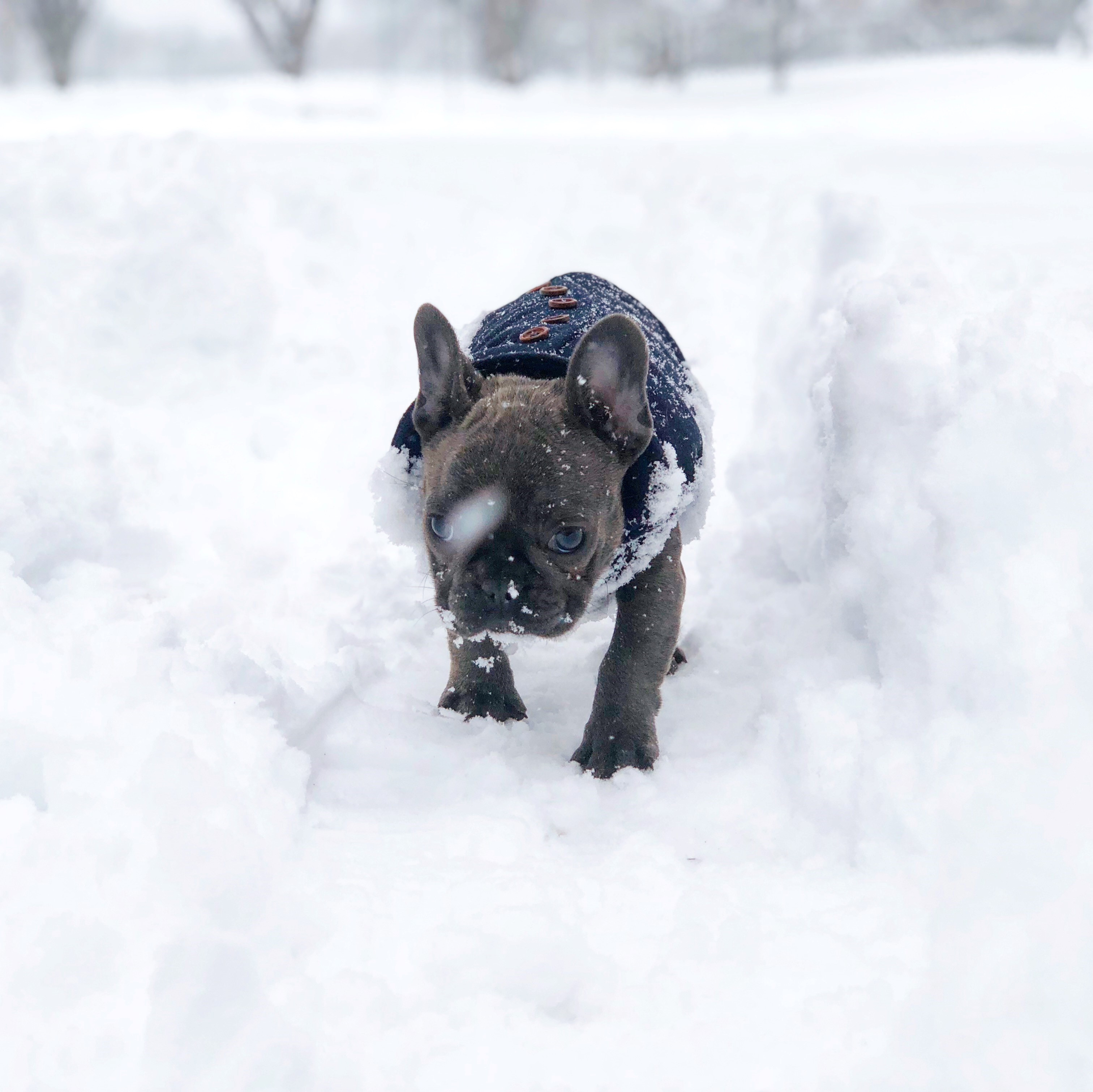 D.C. finally got its first real snowfall of the season -- on March 21! Given that it's the probably the only flakes we'll see for a while, the pups of the DMV decided to really live it up. Check out a few of the adorable pets we spotted chilling in the snow today!{ } (Image: Courtesy{ }IG user @linnarosethefrenchie)