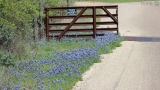 SLIDESHOW: Another great weekend for bluebonnets!