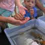Duke University Marine Lab holds annual open house