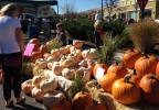 The Pink Pumpkin Festival was held at The Summit in Reno on Saturday, Oct. 1, 2016. (Sinclair Broadcast Group)