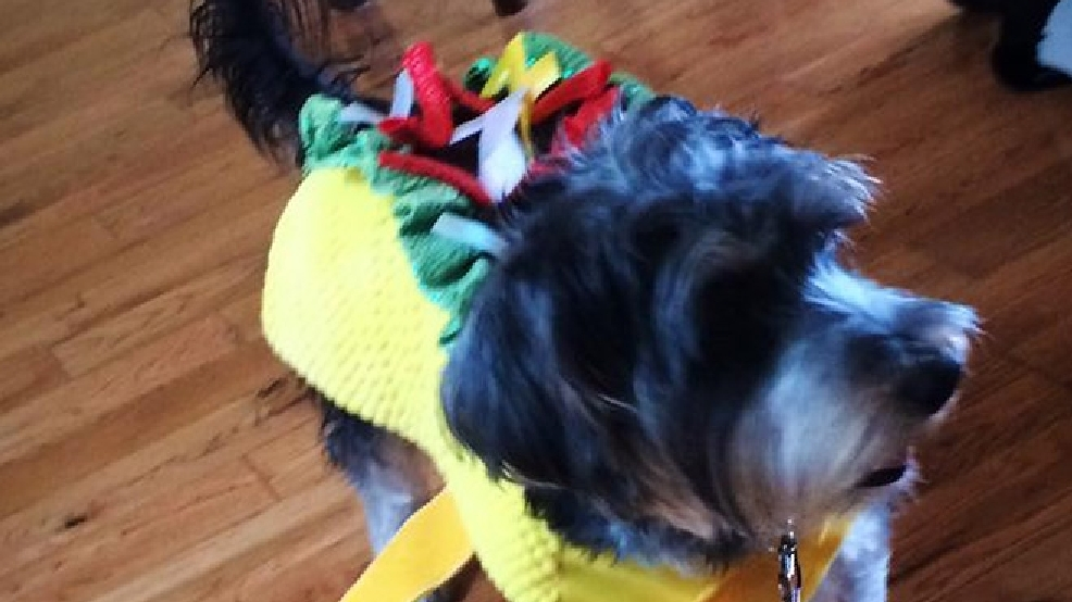 Viewer photos: Local pets get in the Halloween spirit
