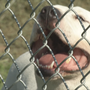 Norman Animal Welfare holds $10 animal adoption event