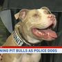 Pit Bull works as police dog, handler hopes to challenge breed stereotypes