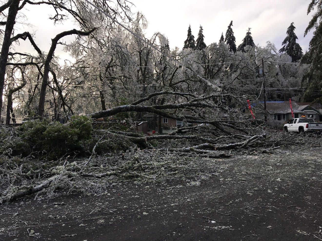EWEB is still working to restore power to Eugene residents three days after an ice storm glazed the city and caused trees to break and fall onto power lines. Photo courtesy EWEB
