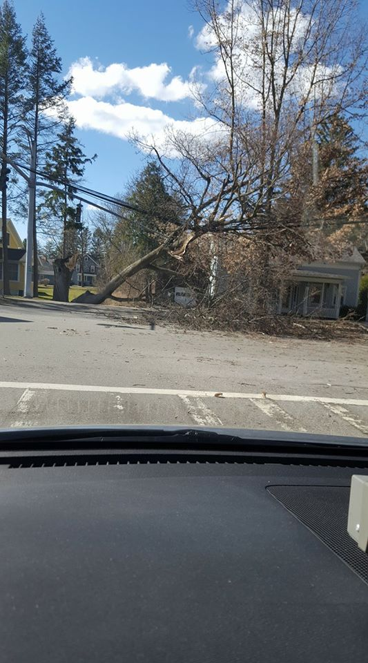 A tree fell on these wires Wednesday afternoon (Photo: Bilal B.)