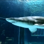 Worker bitten by shark at Point Defiance Zoo & Aquarium