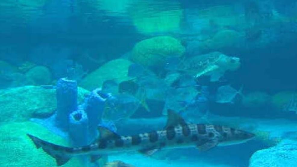 New exhibit opening at Oklahoma Aquarium KTUL