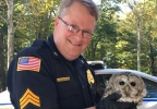 owl rescue whately police