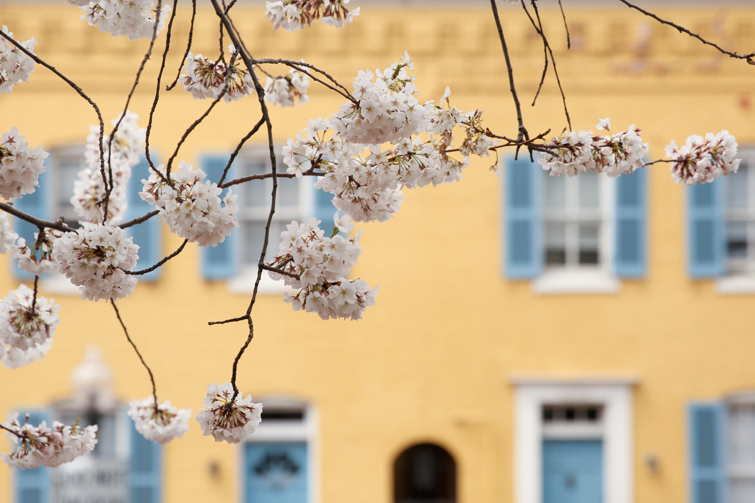 We're well into April, but Mother Nature hasn't gotten the memo that it's time to warm up. Despite lower-than-average temperatures, which will hopefully bounce up soon, the subtle signs of spring are blooming all around D.C. (Amanda Andrade-Rhoades/DC Refined)