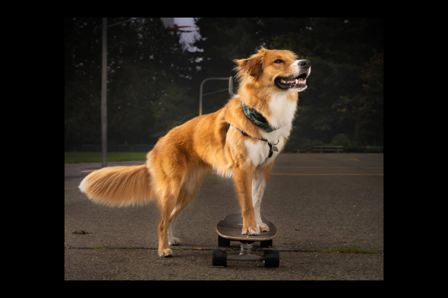 Darrel the Doge is a local pup who took up skateboarding nine months ago, and how he's a star! (Image: @erinlynchphoto)