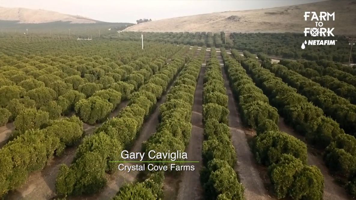 In this segment, Rich Kreps, a Certified Crop Advisor for Ultra Gro, talked with Gary Caviglia with Crystal Cove Farms.