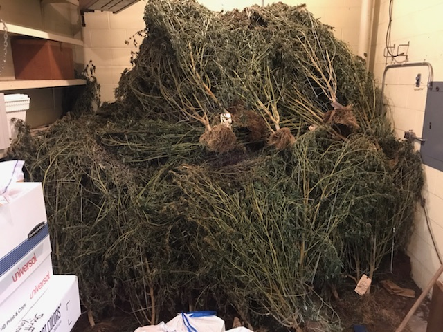 The Charlevoix County Sheriff's Office is overflowing with marijuana plants.{ }(Photos courtesy of Charlevoix County Sheriff's Office).