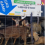 Parmer County Sheriff's Office discovers 117 animals in U-Hauls, makes 2 arrests