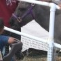 Donkey wisdom on display at Lane County Fair