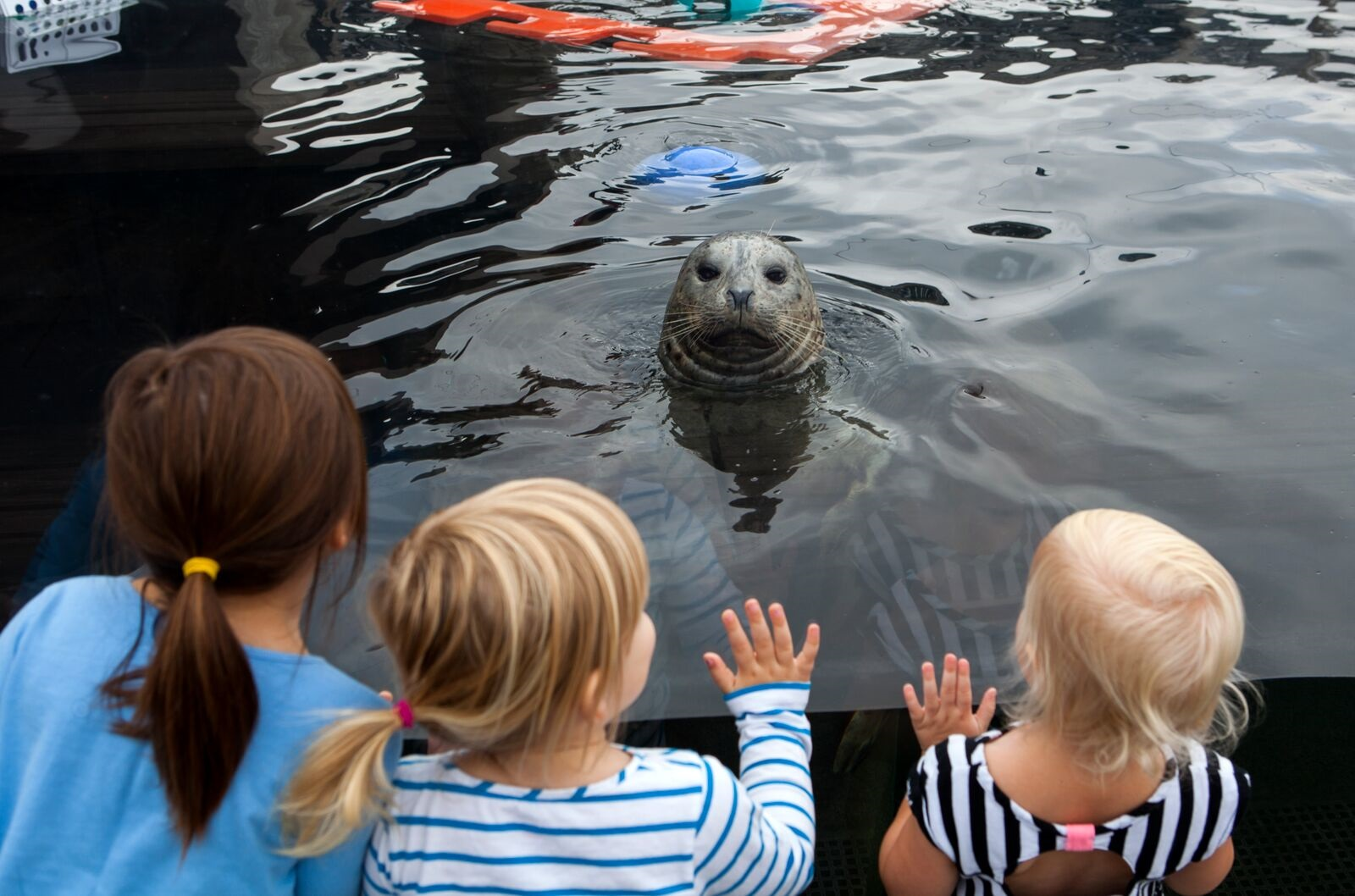 A harbor seal welcomes excited children.