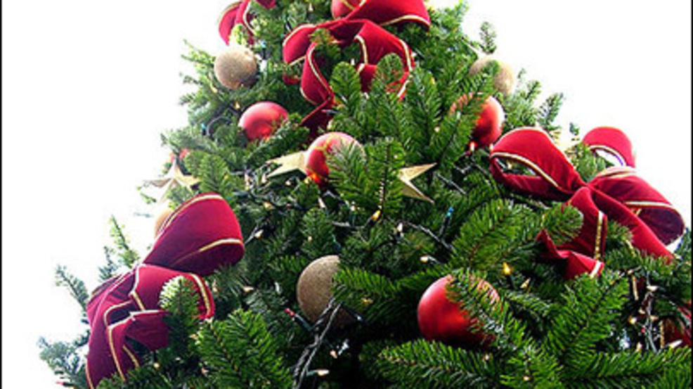 Consumer Watch: Properly getting rid of your Christmas tree | KOKH
