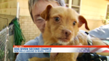 Paralyzed pup getting a second chance in Pensacola