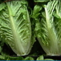 Consumer Reports urges Americans to avoid romaine lettuce amid E.coli concerns