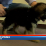 Walbridge Police Department introduces new K-9 dog 'Echo'