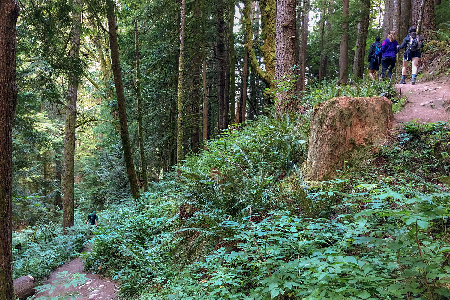 <p>After 15-minutes on the trail, the first switchback reveals itself leading upward into a lush, gradual incline. (Image:{&nbsp;}Rachael A. Jones / Seattle Refined){&nbsp;}</p>