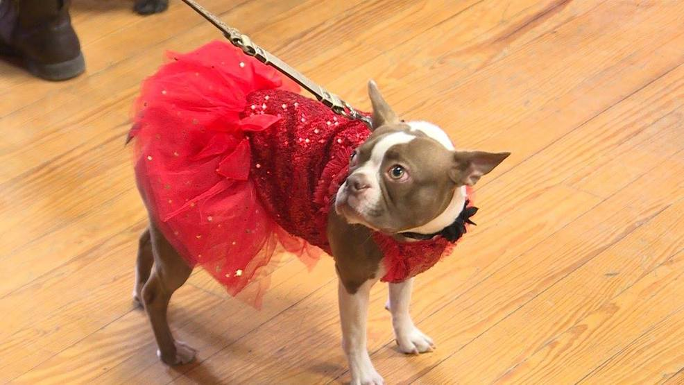 Dogs and their owners bond at doggy prom kptm solutioingenieria Images