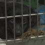 Yakima Humane Society partnered with Macy's to raise money for homeless pet's medical care