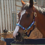 Metro, the painting racehorse, dies at 15