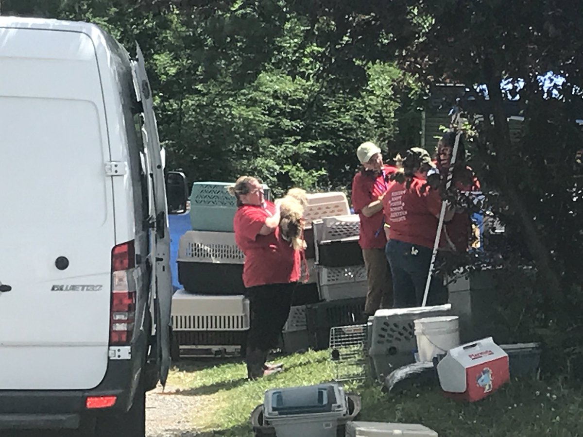 Crews began to remove the dogs a little after noon. (Image: WTVC)