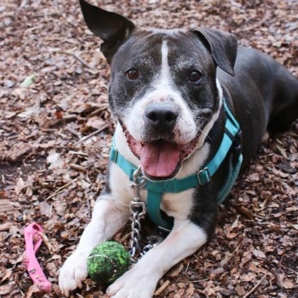 This handsome six-year-old fellow can't wait to find his new home! (Image: Humane Rescue Alliance)
