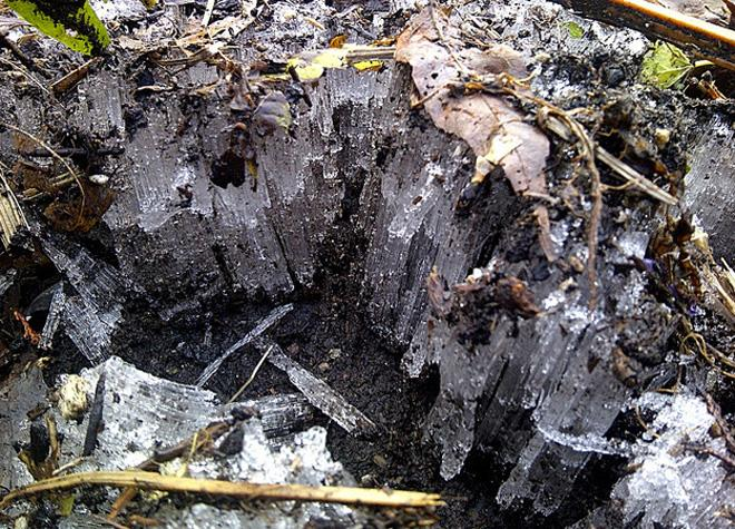 Water in the soil freezes into unique ice structures. (Photo: Bec Thompson)