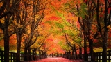Photos: Pacific Northwest shows off its autumn-draped beauty