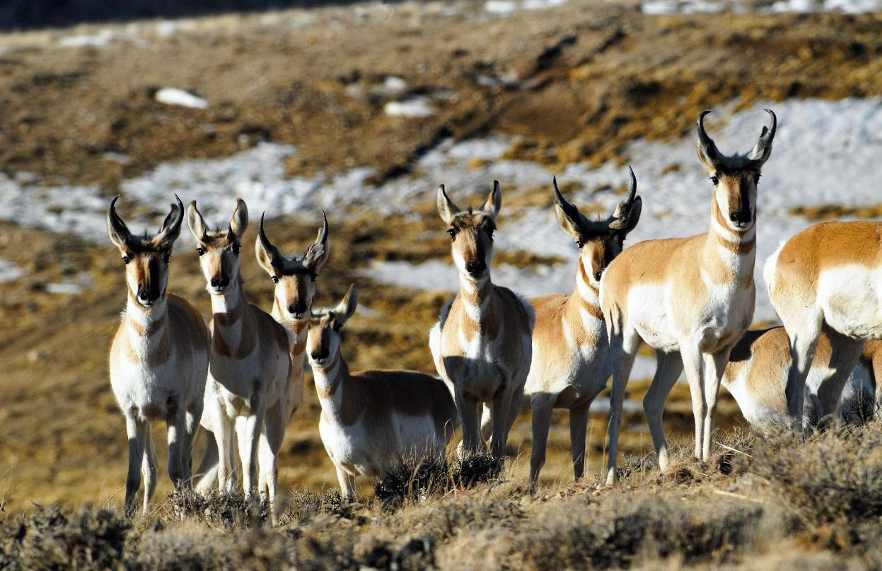The Utah State Parks Board passed a rule to expand hunting opportunities within local state parks. (Photo: Utah DWR)