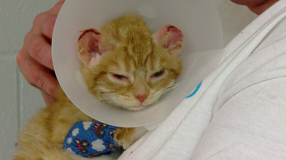 Animal rescue workers susceptible to compassion fatigue ...  |Animal Rescue Worker