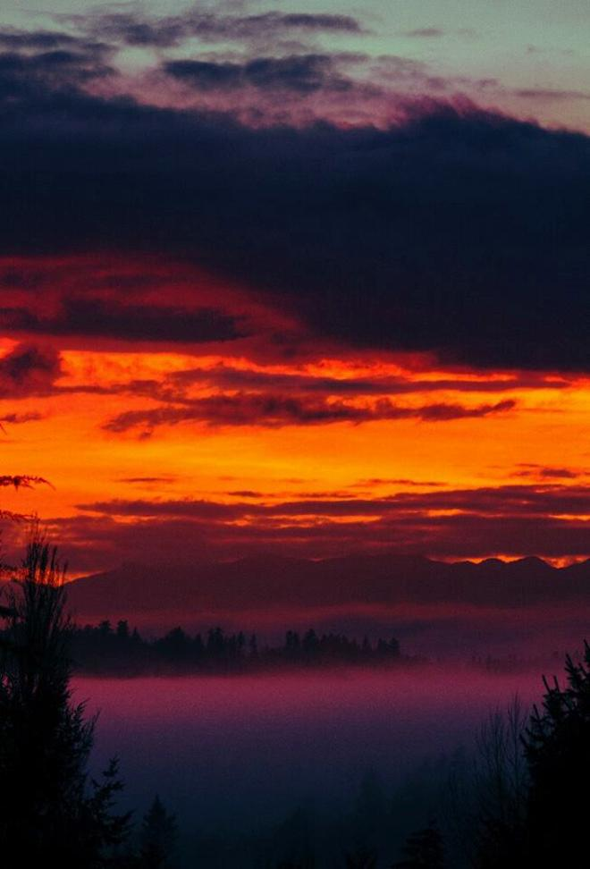 Rise In Fog - Bainbridge Island  Photo: Jason Shipley