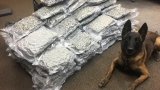PHOTOS: Traffic stop leads to over 80 pounds of marijuana