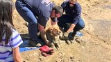 GALLERY: Washoe County firefighters rescue dog stuck in mud pit