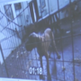 Attorneys want photo, video evidence thrown out in NH animal cruelty case