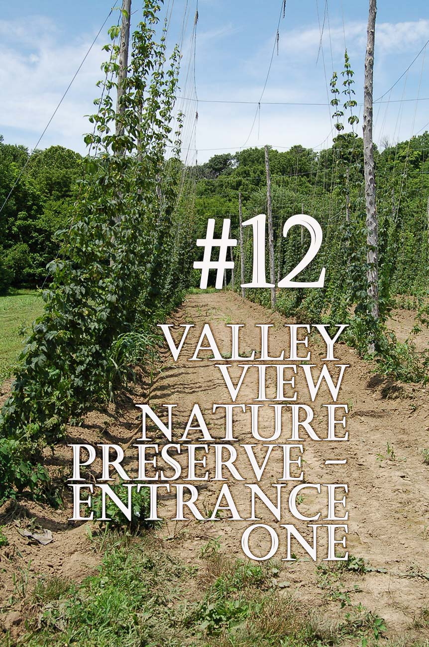 Valley View is a family farm and nature preserve that offers over five miles of mowed trails that trace along the East Fork River, wetlands, wooded areas, and prairie fields. ADDRESS: 790 Garfield Ave, Milford, OH (45150) / Image: Elizabeth A. Lowry // Published: 11.28.20