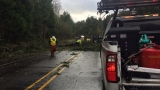Wind causes tree to fall across Highway 58