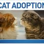 Cats in need of homes in Henderson County